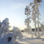 jarvsosnoskor_vinterlandskap